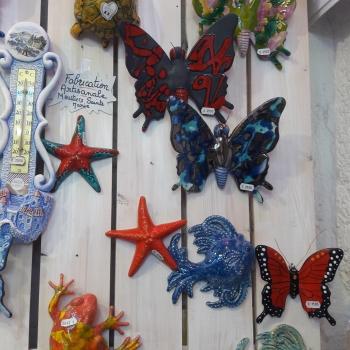 papillon etoile de mer
